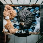 Babies and pets : finding their place